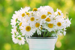 Bunch of chamomile Royalty Free Stock Photography