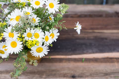 Bunch of chamomile flowers Royalty Free Stock Photos