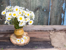 Bunch of chamomile flowers Royalty Free Stock Images