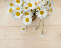 Bunch of chamomile flowers Stock Images