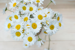 Bunch of chamomile flowers Royalty Free Stock Photography