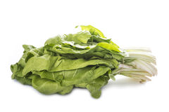 Bunch of chard isolated on white background Royalty Free Stock Photo