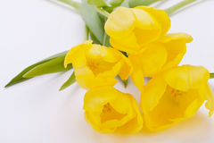 Bunch of cheerful yellow tulips Royalty Free Stock Photo
