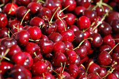 A bunch of cherries Stock Image