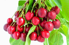 Bunch of cherries Stock Photography