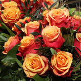 Bunch of cherry brandy Roses Royalty Free Stock Photos