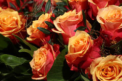 Bunch of cherry brandy Roses Royalty Free Stock Photo