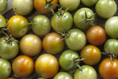 Bunch of cherry tomatoes. Stock Image