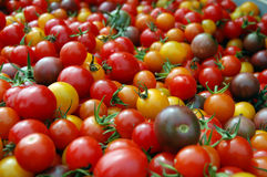 Bunch of Cherry Tomatoes Royalty Free Stock Image