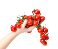 Bunch cherry tomatoes in hand Royalty Free Stock Photos