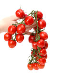 Bunch cherry tomatoes in hand Stock Image