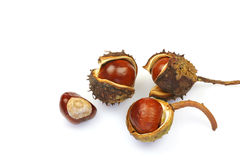 Bunch of chestnuts. And husks isolated on a white background Stock Image