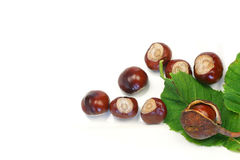 Bunch of chestnuts. Green chestnut leaf and some chestnuts on a white background Royalty Free Stock Photos