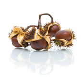 Bunch of chestnuts on a white background close-up Stock Photos