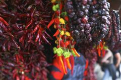 Bunch of chilli peppers of different colors Royalty Free Stock Photo