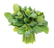 A bunch of chinese spinach Royalty Free Stock Image