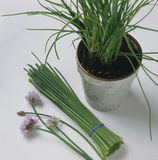 Bunch of chives Royalty Free Stock Photo