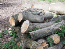 A Bunch of Chopped Down Tree Logs in A Pile Waiting to be Used a Stock Image