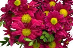 Bunch of chrysanthemum Royalty Free Stock Image