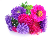 Bunch of chrysanthemum Stock Photo