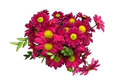Bunch of chrysanthemums. Bunch of chrysanthemum on white background Royalty Free Stock Images