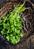 A bunch of cilantro in basket. A bunch of fresh cilantro in basket royalty free stock images