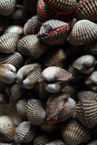 A bunch of Clam Royalty Free Stock Photo
