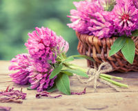 Bunch of clover and basket with flowers Royalty Free Stock Photo