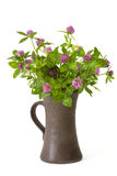 Bunch of clover in a vase Royalty Free Stock Image