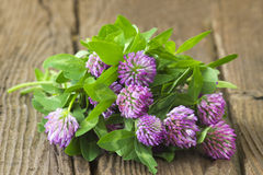 Bunch of clover Royalty Free Stock Image