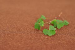 A bunch of clovers. On a brown background Royalty Free Stock Photos