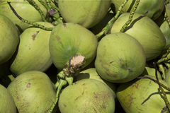 Bunch of coconuts. The coconut tree is a member of the family Arecaceae. It is the only accepted species in the genus Cocos stock images