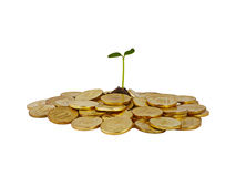 A bunch of coins with a small plant stalk coming out of it Royalty Free Stock Photo