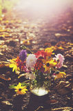 Bunch of colorful autumn flowers in sunbeams Stock Image