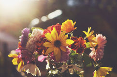 Bunch of colorful flowers on dark background Royalty Free Stock Images