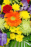 Bunch of colorful flowers Royalty Free Stock Images