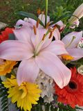 bunch of colorful flowers for Mother& x27;s Day!  Lilium and Gerbere flowers for the beautiful spring royalty free stock image