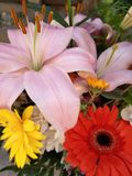 bunch of colorful flowers for Mother& x27;s Day!  Lilium and Gerbere flowers for the beautiful spring stock photography