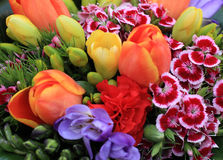 Bunch of colorful flowers Royalty Free Stock Photos