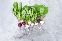 The bunch of colorful fresh radishes with tops on the textured m. Etal surface, top view Royalty Free Stock Photo