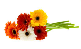 Bunch of colorful gerberas Royalty Free Stock Images