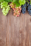 Bunch of colorful grapes with leaves Stock Photography
