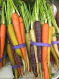 Bunch of colorful organic carrots with green leaves Stock Photography