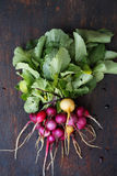 Bunch of colorful organic radishes Royalty Free Stock Photos
