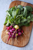 Bunch of colorful organic radishes Stock Image