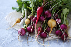 Bunch of colorful radishes Royalty Free Stock Images