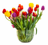Bunch of colorized tulips on white background Stock Images