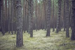 Bunch, Colors, Conifer Stock Images