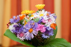 Bunch of coloured flowers Royalty Free Stock Photos