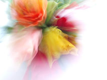 Bunch of colourful roses Stock Images
